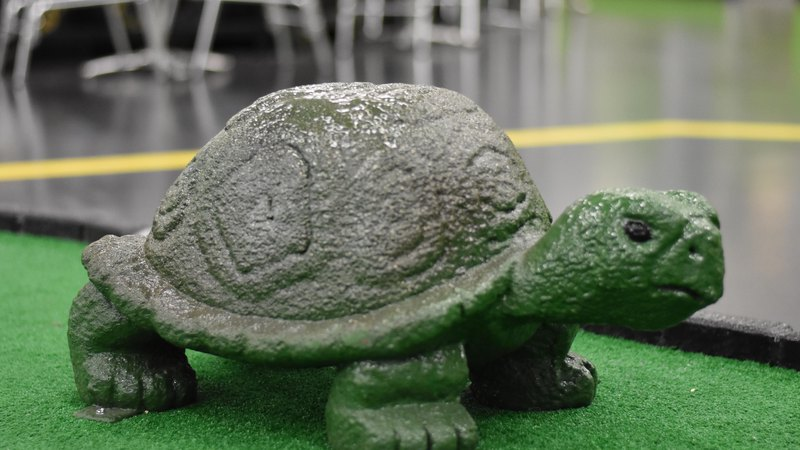 Turtle | Horsham Indoor mini golf